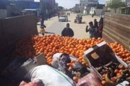 إتلاف نصف طن مواد غذائية وفاكهة فاسدة في غزة وخانيونس