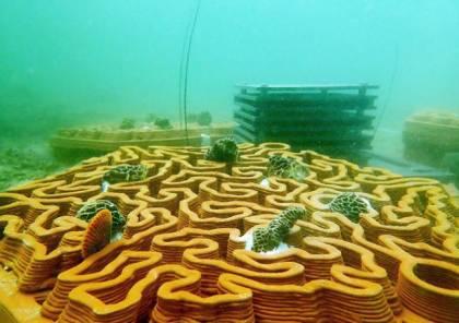 الطباعة الثلاثية الأبعاد تساهم في إنقاذ الشعب المرجانية في هونغ كونغ