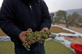 """غزة: فلسطيني ينتج نبتة """"الأزولا"""" في منزله ويطمح بتغطية السوق المحلي (فيديو)"""
