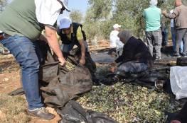 الإغاثة الزراعية تطلق حملتها التطوعية السنوية لقطف الزيتون
