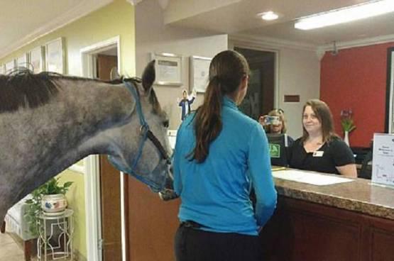 فيديو.. سيدة تحجز غرفة فندقية برفقة حصانها!