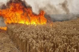 إطلاق بالونات حارقة من قطاع غزة واندلاع حريق في أشكول