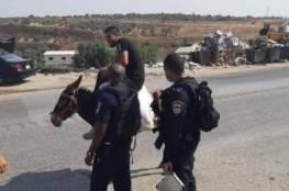 الاحتلال يخالف مواطنًا يركب حمارًا لعدم ارتداء كمامة شرق قلقيلية