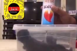فيديو .. شاب يقتل قطط الكويت يفجر غضبا
