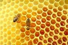"""""""رسائل صوتية""""... علماء يفكون الألغاز العجيبة حول ملكات النحل"""