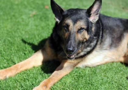 بسبب انتشار داء الكلب.. اسرائيل تحذر من مخالطة الحيوانات