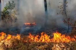 احتراق 600 شجرة في حريق كبير في بلدة برطعة