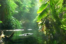 البرازيل تفقد نحو 10 آلاف كيلومتر مربع من غابات الأمازون المطيرة في عام واحد