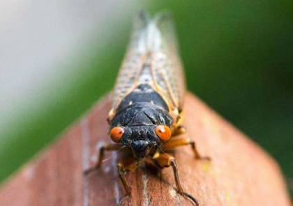 حشرات محشورة تحت الأرض تستعد للانطلاق بالملايين