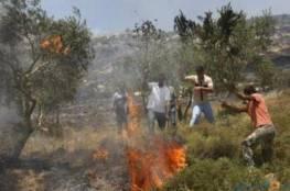 مستوطنون يحرقون أشجار زيتون معمرة في يطا