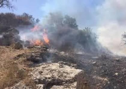 مستوطنون يحرقون مئات الأشجار جنوب نابلس