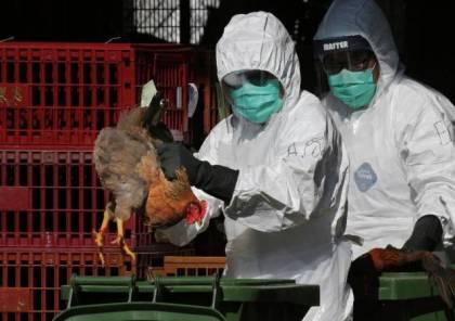 هولندا تعدم 35700 دجاجة بعد رصد سلالة شديدة العدوى من إنفلونزا الطيور