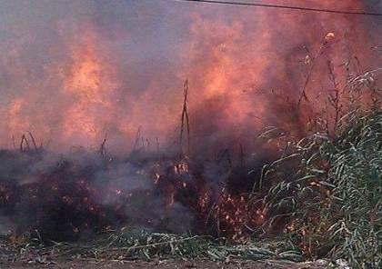 حريق يلتهم نحو 100 شجرة زيتون وحرجية جنوب جنين