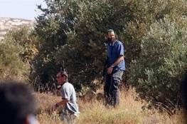 مستوطنون يسرقون ثمار زيتون يقطعون عشرات الأشجار في قرى نابلس