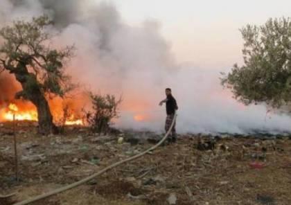 جنين : إحتراق 850 شجرة زيتون