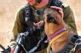إخلاء 18 جنديا إسرائيليًا من قاعدة عسكرية للاشتباه باصابتهم بداء الكلب