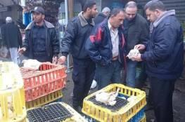 الشرطة بغزة تنوه بشأن تفاصيل ضبط محل لبيع دواجن فاسدة
