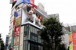 قطّ ثلاثي الأبعاد يجذب الحشود في طوكيو