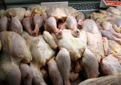 غزة: ضبط صاحب محل دواجن يبيع الدجاج المريض والميت للمواطنين