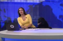 كلب يقتحم استديو أخبار في روسيا ويعانق المذيعة (فيديو)