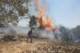 احتراق أشجار ودفيئة في منطقة جنين