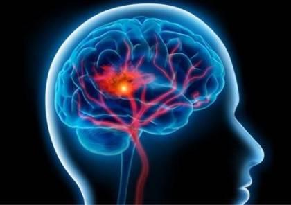 دراسة تكشف عن آلية شيخوخة الدماغ للرئيسيات غير البشرية
