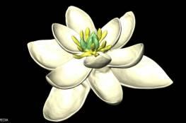 علماء يتوصلوا لشكل أول زهرة في التاريخ