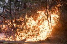 احتراق 150 شجرة زيتون غرب جنين