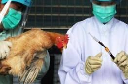 انفلونزا الطيور تضرب مزارع الدواجن في كيبوتس شمال إسرائيل