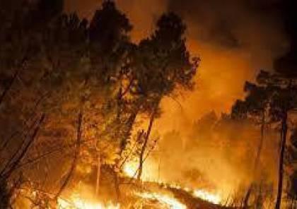 احتراق 154 شجرة مثمرة في 15 حريقاً بمحافظة جنين