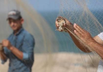 """سلطة البيئة تحظر صيد """"الفر"""" بغزة وتتوعد المخالفين"""