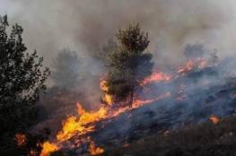 جنين: احتراق 30 شجرة زيتون في خمسة حرائق