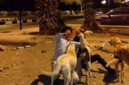 15 كلبا ضالا تفترس طفلا سعوديا