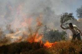 مستوطنون يضرمون النار بحقول زراعية في قرية جالود جنوب نابلس