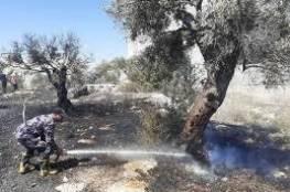 احتراق أشجار زيتون وحرجية في محافظة جنين