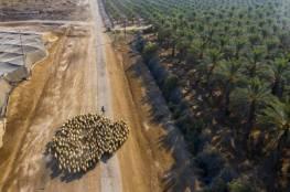 """هارتس : وزارة الجيش الإسرائيلية استخدمت """"كاكال"""" لشراء أراض بالضفة الغربية للمستوطنين"""