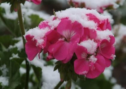 فوائد العلاج بالطين الأخضر والوردى الساخن