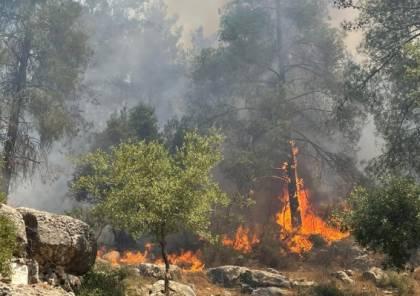 تجدد الحريق بغابات القدس.. النيران تشتعل بـ20 ألف دونم