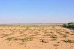 """""""الأوقاف بغزة"""" توضح معايير اختيار طلبات الاستثمار في الأراضي الوقفية"""