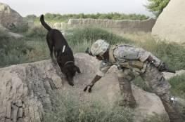 لم يبادلوها الوفاء.. الجنود الأمريكيون يتخلون عن كلابهم التي خدمتهم في أفغانستان