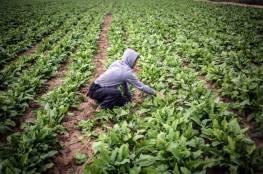 تداعيات أزمة كورونا تتسبب بخسائر كبيرة للمزارعين في غزة