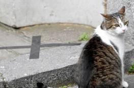 وفاة امرأة بعد أن لحستها قطة !