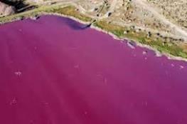 شاهد: بحيرة في الأرجنتين تتحول إلى اللون الوردي بسبب غير طبيعي