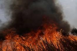 الاحتلال يحرق 14 دونماً ويسمم 12 رأساً من الغنم شرق رام الله