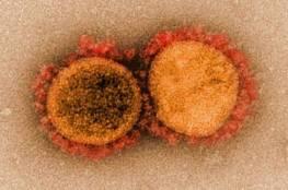 اكتشاف صادم... الطفرة الهندية تستطيع تحييد المناعة المكتسبة ضد فيروس كورونا