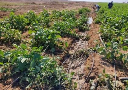 الزراعة: السلة الغذائية في غزة تقترب من حافة الخطر