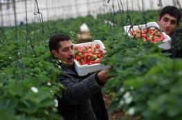 الزراعة تسلم تعويضات للمزارعين المتضررين بفعل الظروف الجوية في قلقيلية وطولكرم