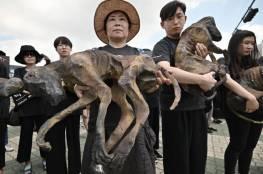 """مسيرات مناهضة في """"يوم لحوم الكلاب"""" بكوريا الجنوبية"""