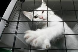 هروب قطة من سجن شديد الحراسة لحيازتها المخدرات