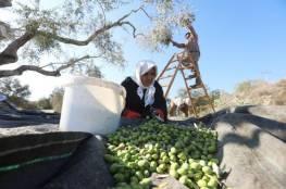 الدفاع المدني تحذر من مخاطر الحالة الجوية المتزامنة مع موسم قطف الزيتون